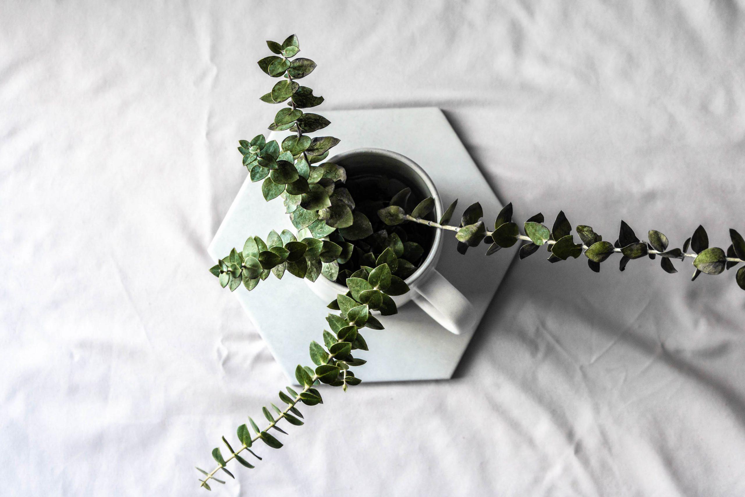 Window light & Plants